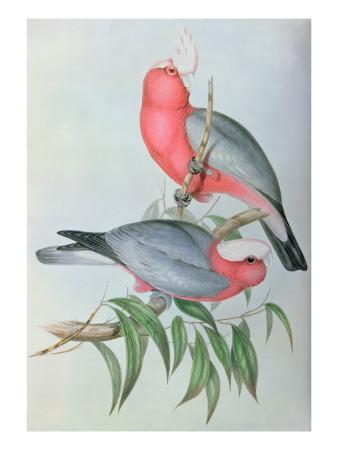 https://imgc.allpostersimages.com/img/posters/birds-of-asia_u-L-PCJ3UN0.jpg?artPerspective=n