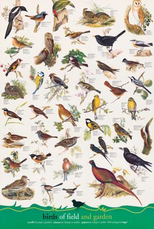 Birds of Fields and Gardens
