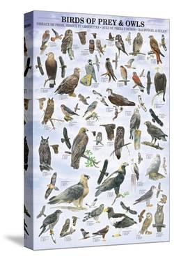 Birds of Prey and Owls