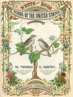 Birds of the US, Eggs and Nests