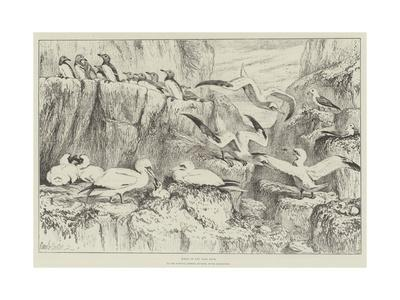 https://imgc.allpostersimages.com/img/posters/birds-on-the-bass-rock-in-the-natural-history-museum-south-kensington_u-L-PUSM0R0.jpg?p=0