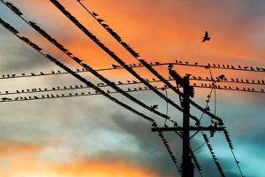Birds perching on telephone lines at dusk, Tulsa, Oklahoma, USA