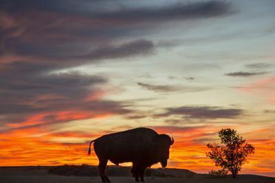 https://imgc.allpostersimages.com/img/posters/bison-bull-silhouette-theodore-roosevelt-np-north-dakota-usa_u-L-PXR7720.jpg?p=0
