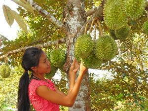 Woman Inspecting Durian Fruit by Bjorn Svensson