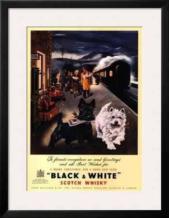 Black and White Scotch