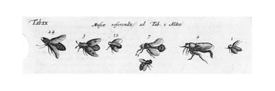 Black and White Winged Insects Diagram