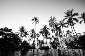 Black Palms on Samui island