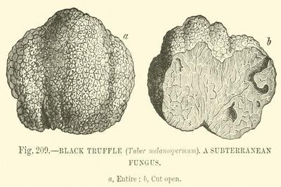 https://imgc.allpostersimages.com/img/posters/black-truffle_u-L-PPFENA0.jpg?artPerspective=n