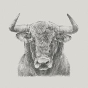 Black & White Bull