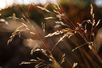 https://imgc.allpostersimages.com/img/posters/blades-of-grass-in-the-back-light-dalsland-sweden_u-L-Q1EXV560.jpg?artPerspective=n
