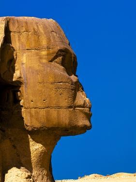Detail of Great Sphinx at Giza by Blaine Harrington