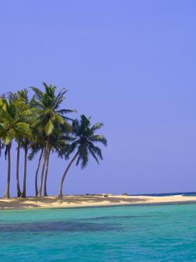 Palm Trees on Pelican Island by Blaine Harrington