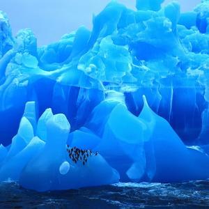 Bearded Penguin, Chinstrap Penguin (Pygoscelis Antarctica, Pygoscelis Antarcticus), Antarctica by Blickwinkel
