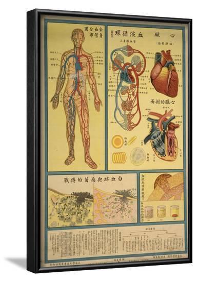 Blood Circulation and Coagulation--Framed Art Print