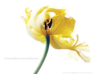 Bloom - Edge Of A Petal