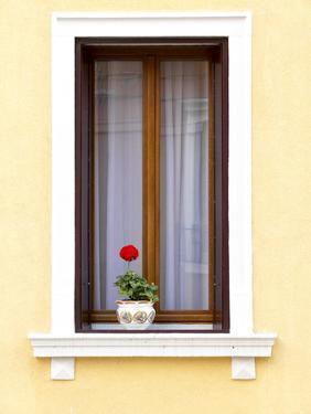 Blooming Red Geranium on Beautiful White Wooden Windowsill