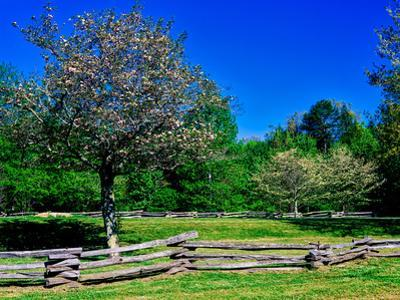 Blossom trees in farm, Davidson River Campground, Pisgah National Forest, Brevard, North Carolin...