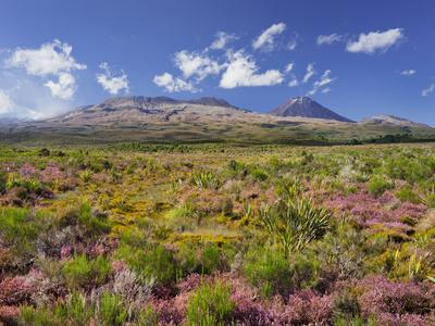 https://imgc.allpostersimages.com/img/posters/blossoming-heathers-mount-ngauruhoe-tongariro-national-park-manawatu-manganui-north-island_u-L-Q11YLIY0.jpg?p=0