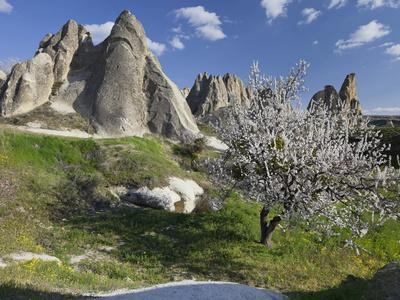 https://imgc.allpostersimages.com/img/posters/blossoming-trees-and-tuff-stone-in-the-zemi-valley-gshreme-cappadocia-anatolia-turkey_u-L-Q11YTVJ0.jpg?p=0