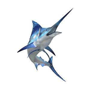 Blue Marli
