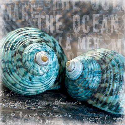 https://imgc.allpostersimages.com/img/posters/blue-ocean-shells_u-L-F4EHLL0.jpg?artPerspective=n