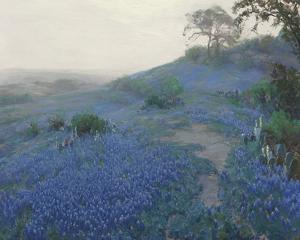 Bluebonnet Field, Early Morning, San Antonio Texas