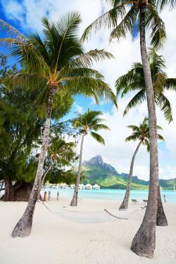 Beautiful Beach with Coconut Palms on Bora Bora Island in French Polynesia by BlueOrange Studio