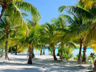 Palm Trees at Tropical Coast on Bora Bora Island by BlueOrange Studio