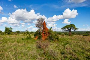 Termite Mount in Tarangire National Park, Tanzania Africa by BlueOrange Studio