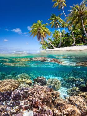 Tropical Island by Blueorangestudio