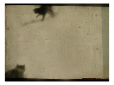 https://imgc.allpostersimages.com/img/posters/blurred-cats_u-L-PYYTD60.jpg?p=0