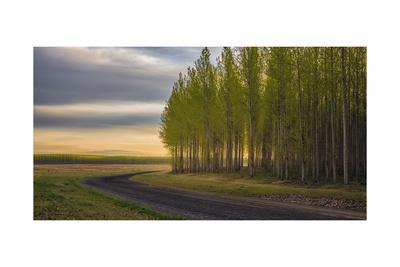 https://imgc.allpostersimages.com/img/posters/boardman-tree-farm_u-L-Q1CAO0L0.jpg?artPerspective=n