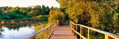 Boardwalk in a forest, Magee Marsh Wildlife Area, Oak Harbor, Ohio, USA