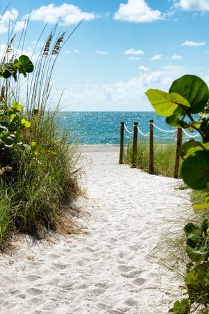 https://imgc.allpostersimages.com/img/posters/boardwalk-on-the-beach-miami-florida_u-L-PZ50C20.jpg?artPerspective=n