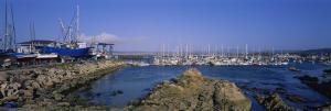Boats Docked at a Harbor, Marina, Monterey, California, USA
