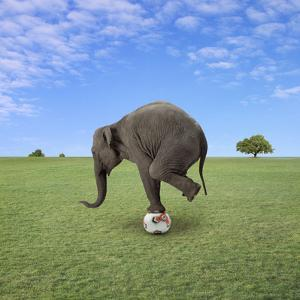 Elephant Balancing on Football by Bob Elsdale