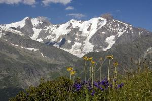 Arnica Montana And Mont Blanc by Bob Gibbons