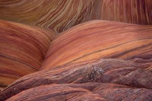Close-up of sinuous eroded banded sandstone rocks, The Wave, Arizona by Bob Gibbons