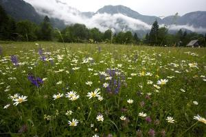 Hay Meadow In Slovenia by Bob Gibbons