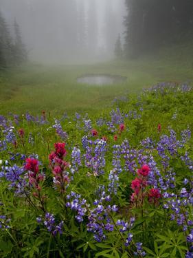 Misty forest pool with broadleaf lupin and magenta paintbrush, near Dewey Lake, Mount Rainier by Bob Gibbons