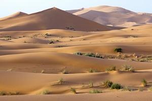 Saharan Sand Dunes by Bob Gibbons