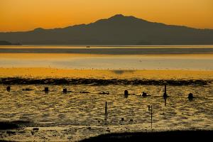 View of bay with feeding waders at sunset, Mount Tamalpais, Pinole Point, San Francisco Bay by Bob Gibbons