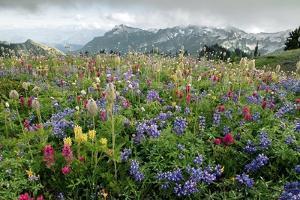 Wildflower Meadow by Bob Gibbons