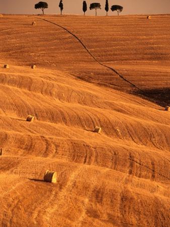 Bales in Rolling Fields