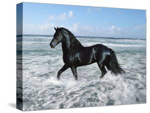 Dream Horses 015 by Bob Langrish