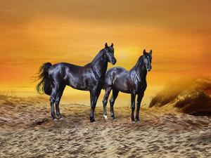 Dream Horses 016 by Bob Langrish