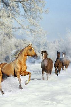 Dream Horses 017 by Bob Langrish