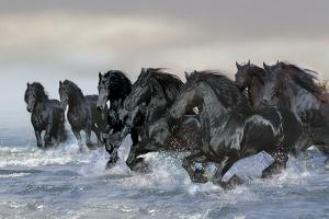Dream Horses 019 by Bob Langrish