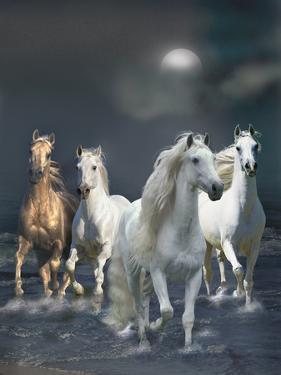 Dream Horses 020 by Bob Langrish