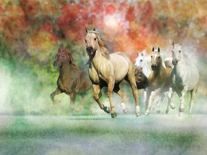 Dream Horses 022 by Bob Langrish